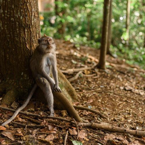 indonezja, małpka, wycieczka incentive